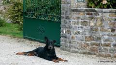 Hofhund gegenüber der Biauderie