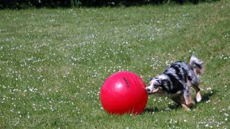 Treibball im Garten
